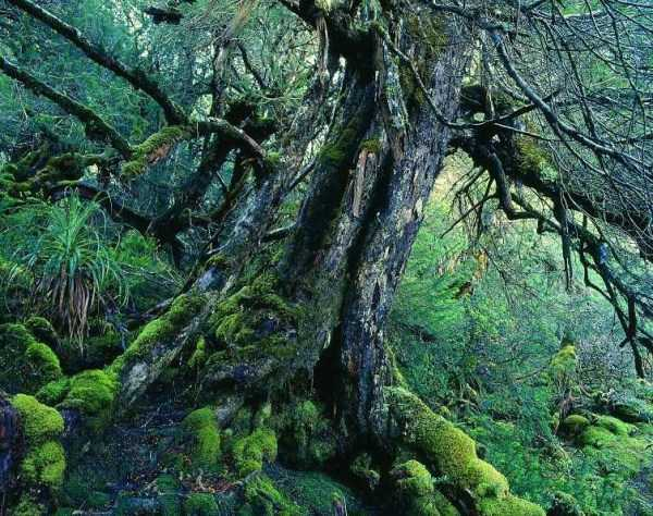strange-trees (21)