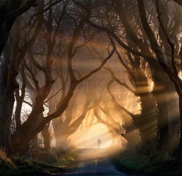 strange-trees (24)