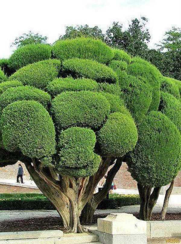 strange-trees (25)