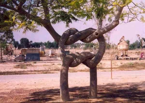 strange-trees (26)