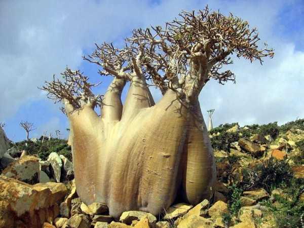strange-trees (29)