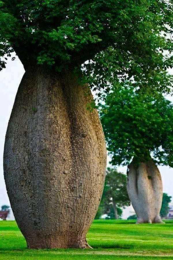 strange-trees (4)