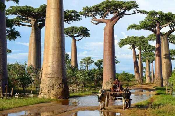 strange-trees (5)