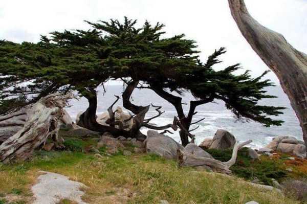 strange-trees (6)