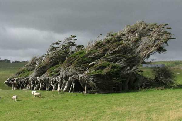 strange-trees (7)