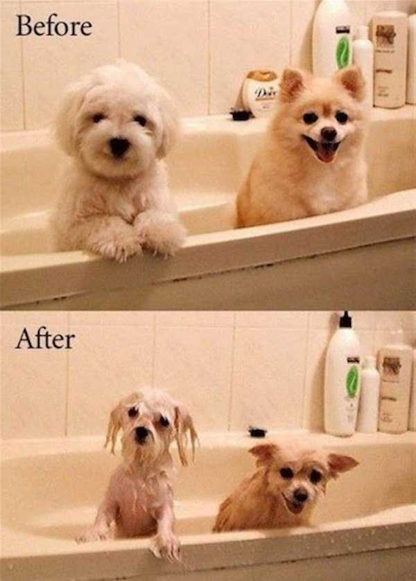 before-and-after-pics (21)