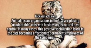 random-facts (2)
