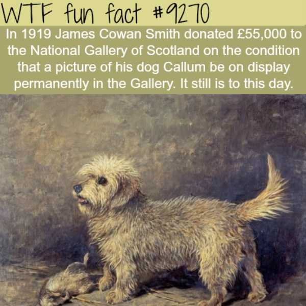 random-fun-facts (13)
