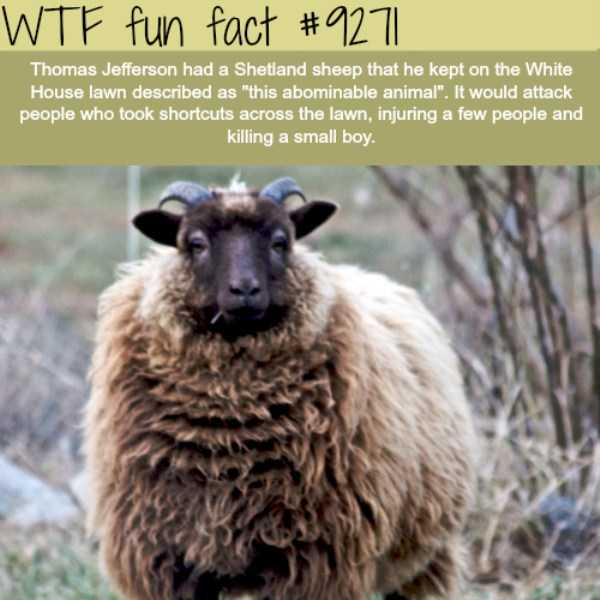 random-fun-facts (14)