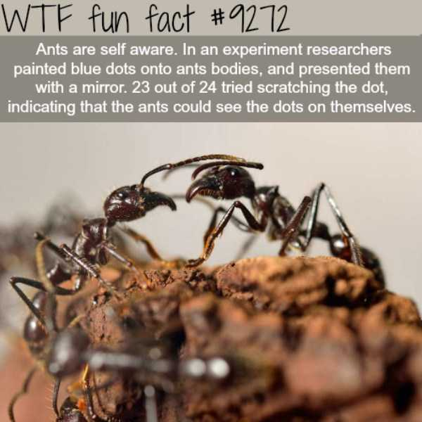 random-fun-facts (15)