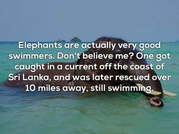random-fun-facts (23)