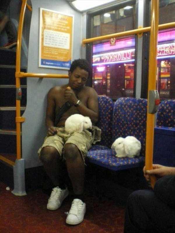 strange-images-public-transportation (20)