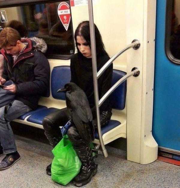 strange-images-public-transportation (47)