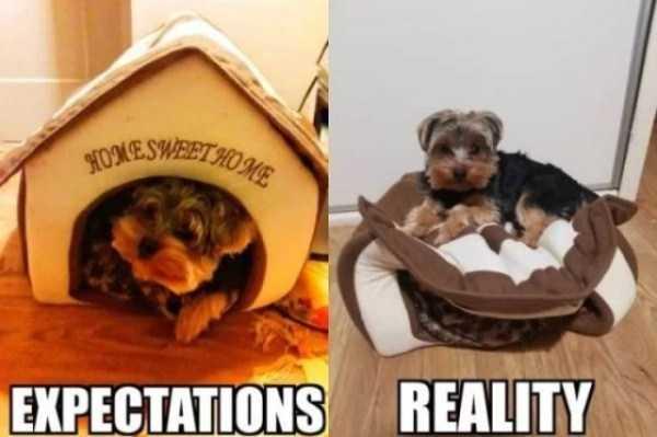 expectations-vs-reality-5
