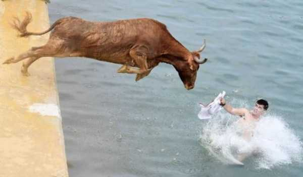 perfectly-timed-pics-4